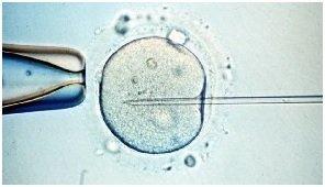 Plazo legal para la fecundación postmortem en catalunya
